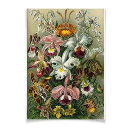 """Плакат A3(29.7x42) """"Орхидеи (Orchideae, Ernst Haeckel)"""" - цветы, картина, орхидея, красота форм в природе, эрнст геккель"""
