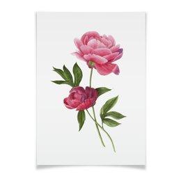 """Плакат A3(29.7x42) """"Пионы"""" - цветы, акварель, пионы, пион, ботаническая иллюстрация"""