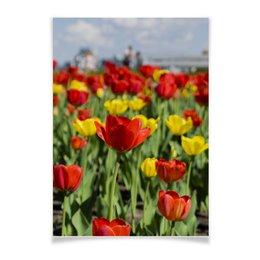 "Плакат A3(29.7x42) ""Тюльпаны"" - цветы, тюльпаны, казань, фото цветов, фото тюльпанов"