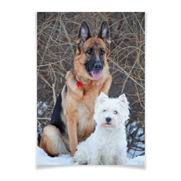 "Плакат A3(29.7x42) ""Дружба пород"" - зима, собаки, овчарка, овчар-команда, вестик"