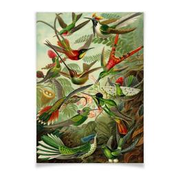 """Плакат A3(29.7x42) """"Колибри (Trochilidae, Ernst Haeckel)"""" - 8 марта, колибри, день матери, красота форм в природе, эрнст геккель"""