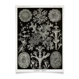 """Плакат A3(29.7x42) """"Лишайники (Lichenes, Ernst Haeckel)"""" - картина, черно-белый, красота форм в природе, эрнст геккель, лишайники"""