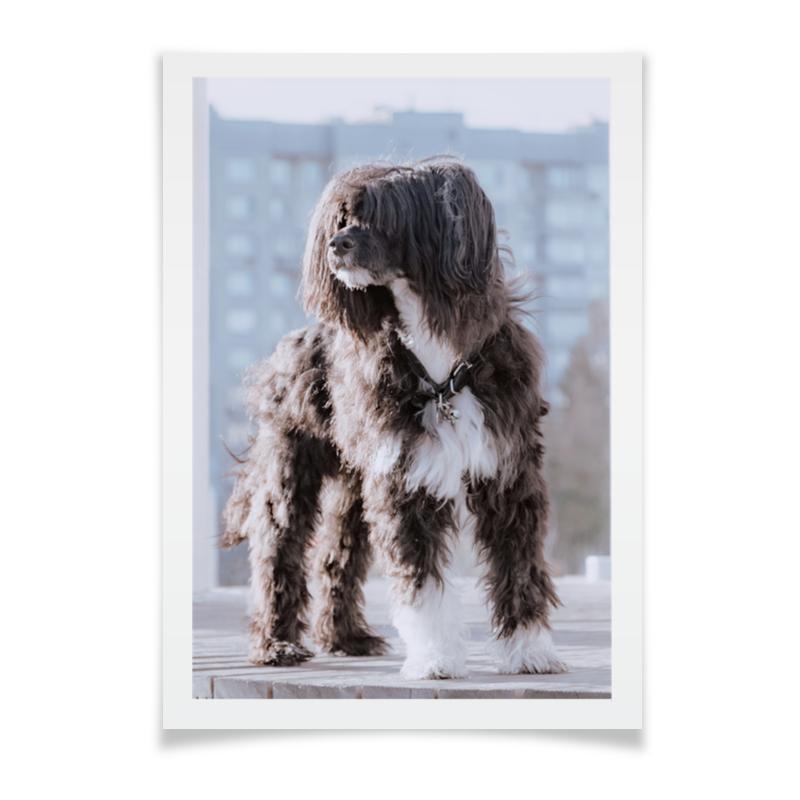 Плакат A2(42x59) Printio Пёс. китайская хохлатая павдеруф