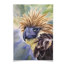"""Плакат A2(42x59) """"Филиппинский орел """" - животные, птица, фиолетовый, орел, иллюстрация"""
