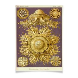 """Плакат A2(42x59) """"Discomedusae (Дискомедузы), Ernst Haeckel"""" - биология, красота форм в природе, эрнст геккель"""
