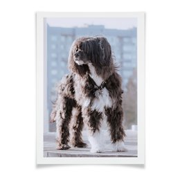 """Плакат A2(42x59) """"Пёс. китайская хохлатая павдеруф"""" - лето, солнце, пес, собака, нос"""