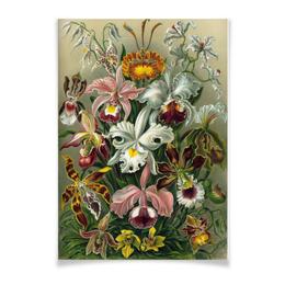 """Плакат A2(42x59) """"Орхидеи (Orchideae, Ernst Haeckel)"""" - цветы, картина, орхидея, красота форм в природе, эрнст геккель"""