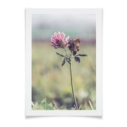 """Плакат A2(42x59) """"Клевер розовый"""" - лето, клевер, осень, природа"""
