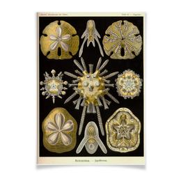 """Плакат A2(42x59) """"Echinidea (Эхинидея), Ernst Haeckel"""" - биология, красота форм в природе, эрнст геккель"""