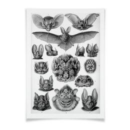 """Плакат A2(42x59) """"Летучие мыши Эрнста Геккеля"""" - хэллоуин, черно-белый, летучие мыши, красота форм в природе, эрнст геккель"""