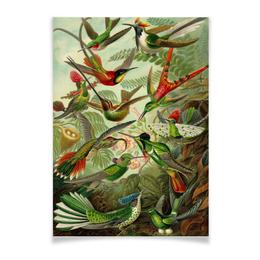 """Плакат A2(42x59) """"Колибри (Trochilidae, Ernst Haeckel)"""" - 8 марта, колибри, день матери, красота форм в природе, эрнст геккель"""