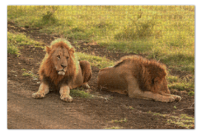 Пазл 73.5 x 48.8 (1000 элементов) Printio Львы рубель птицы львы 02