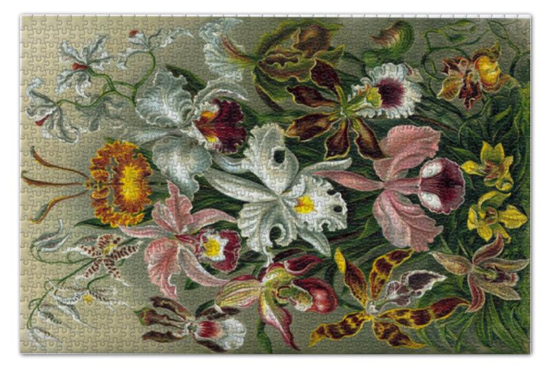 Пазл 73.5 x 48.8 (1000 элементов) Printio Орхидеи (orchideae, ernst haeckel) пазл 73 5 x 48 8 1000 элементов printio сад земных наслаждений