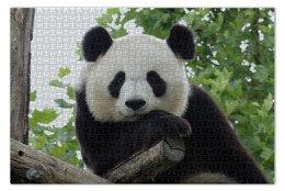 "Пазл 73.5 x 48.8 (1000 элементов) ""Панда"" - панда, фотография, животное"