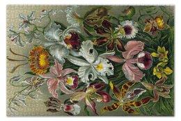 """Пазл 73.5 x 48.8 (1000 элементов) """"Орхидеи (Orchideae, Ernst Haeckel)"""" - 14фев, 8мар, картина, орхидея, эрнст геккель"""