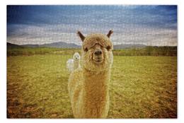 "Пазл 73.5 x 48.8 (1000 элементов) ""Альпака"" - лама, alpaca, lama"