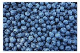 """Пазл 73.5 x 48.8 (1000 элементов) """"Черника"""" - ягоды, черника, blueberry"""