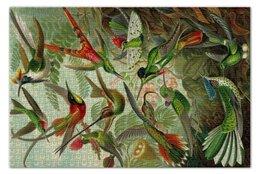 """Пазл 73.5 x 48.8 (1000 элементов) """"Колибри (Trochilidae, Ernst Haeckel)"""" - птицы, картина, колибри, день матери, эрнст геккель"""