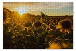 """Пазл 73.5 x 48.8 (1000 элементов) """"Подсолнухи"""" - лето, рассвет, поле"""