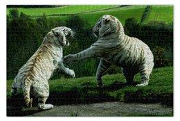 "Пазл 73.5 x 48.8 (1000 элементов) ""Белые тигры"" - парк, tigers"