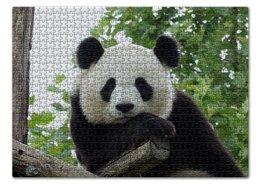 "Пазл 43.5 x 31.4 (408 элементов) ""Панда"" - панда, фотография, животное"