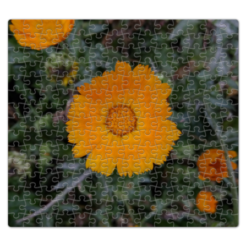 Printio Летние цветы цветы щорса 11