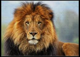 """Пазл магнитный 27.4 x 30.4 (210 элементов) """"Царь зверей"""" - прикольно, арт, стиль, популярные, африка, лев, прикольные, в подарок, интерьер, оригинально"""