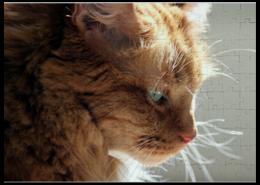 """Пазл магнитный 27.4 x 30.4 (210 элементов) """"Cat's morning"""" - кот, кошка, прикольно, арт, стиль, популярные, рисунок, прикольные, в подарок, интерьер"""