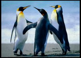 """Пазл магнитный 27.4 x 30.4 (210 элементов) """"пингвины"""" - прикольные"""