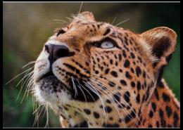 """Пазл магнитный 27.4 x 30.4 (210 элементов) """"Леопард"""" - прикольно, арт, стиль, популярные, прикольные, в подарок, интерьер, взгляд, оригинально, девушке"""