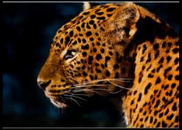 """Пазл магнитный 27.4 x 30.4 (210 элементов) """"Леопард"""" - прикольно, арт, красиво, лето, стиль, популярные, солнце, прикольные, в подарок, интерьер"""
