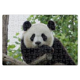 """Пазл магнитный 18 x 27 (126 элементов) """"Панда"""" - панда, фотография, животное"""
