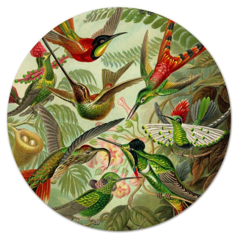 Коврик для мышки (круглый) Printio Колибри (trochilidae, ernst haeckel) пазл 43 5 x 31 4 408 элементов printio колибри trochilidae ernst haeckel