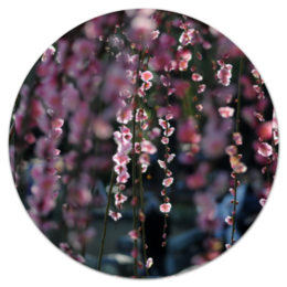 "Коврик для мышки (круглый) ""Цветущая сакура"" - любовь, цветы, солнце, красота, япония, japan, сакура, cherry blossom, sakura"