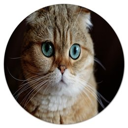 """Коврик для мышки (круглый) """"Котенок"""" - кот, кошка, животные, коты, котята"""