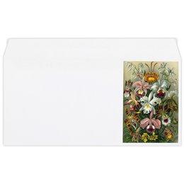 """Конверт маленький """"Евро"""" Е65 """"Орхидеи (Orchideae, Ernst Haeckel)"""" - цветы, картина, орхидея, красота форм в природе, эрнст геккель"""