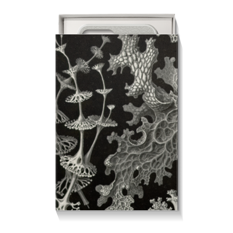 Коробка для чехлов Printio Лишайники (lichenes, ernst haeckel)