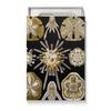 """Подарочная коробка малая (пенал) """"Echinidea (Эхинидея), Ernst Haeckel"""" - новый год, картина, биология, красота форм в природе, эрнст геккель"""