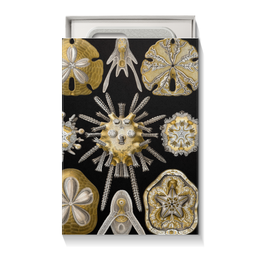 """Коробка для чехлов """"Echinidea (Эхинидея), Ernst Haeckel"""" - новый год, картина, биология, красота форм в природе, эрнст геккель"""