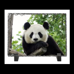 "Каменная рамка ""Панда"" - панда, фотография, животное"
