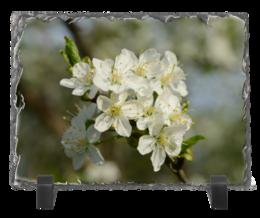 """Каменная рамка """"Весна"""" - цветы, фото, весна, природа"""