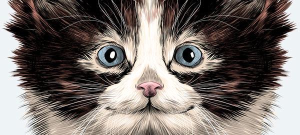 Одежда с котами